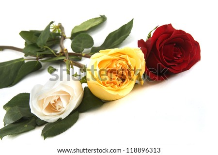 three colorful roses on a white background