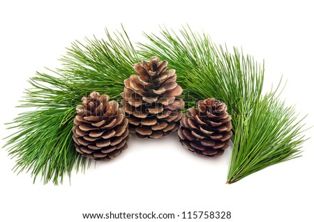 Three cones with green branches on a white background - stock photo