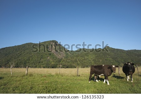 Three cows on rural landscape.