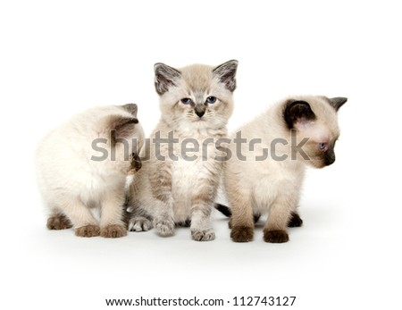 three cute baby kittens sitting on white background