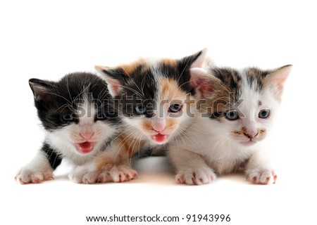 three cute kitten in front of white background