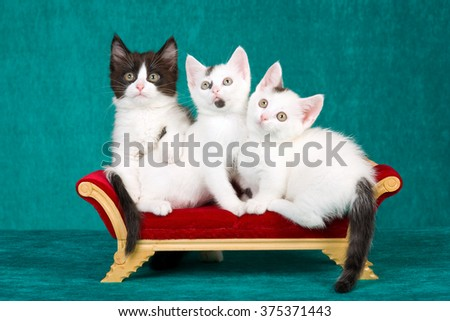 Three cute kittens sitting on miniature chaise couch sofa against green background