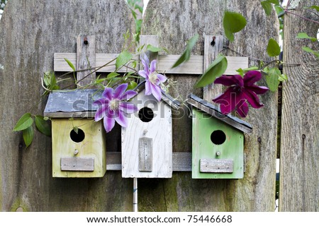 Three cute little birdhouses on rustic wooden fence with pink and purple Clematis plants growing on them - stock photo
