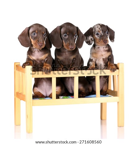 Three cute puppy sitting in a wooden crib - stock photo