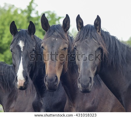 three dark horse standing next to each other on a background of green trees