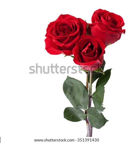 Three dark red roses isolated on white - stock photo