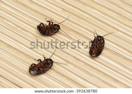 three dead cockroach on the floor  in an apartment house.  Inside high-rise buildings. Fight with cockroaches in the apartment. Extermination. - stock photo