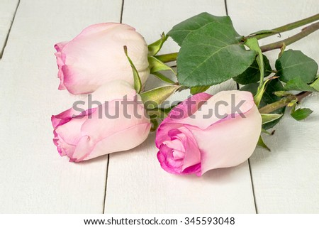 Three delicate pink roses on a white wooden table - stock photo