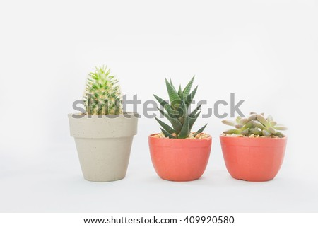 Three different cactus on white background.