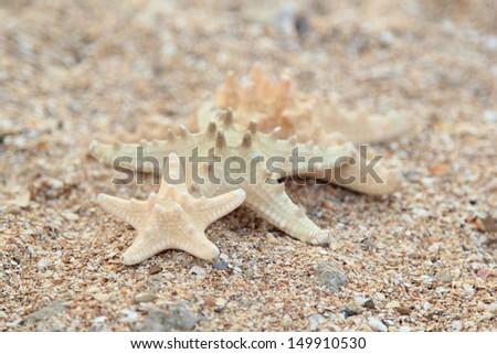 Three different sized starfish on the beach - stock photo