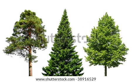 Three different trees isolated on white - stock photo