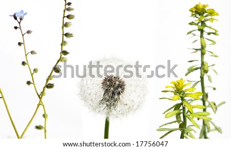three different types of flora against white background - stock photo