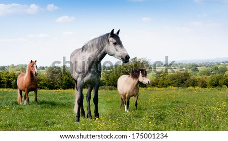 Three different types of horses standing in field looking at something out of shot on summers day. - stock photo