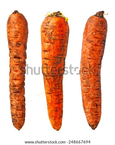 Three dirty carrots on white background - stock photo