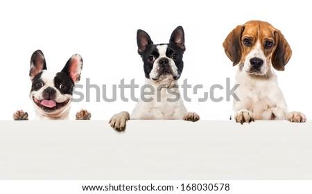 Three dogs - stock photo