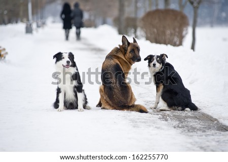 Three dogs in the snow. - stock photo