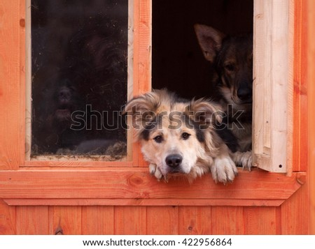 Three Dogs look out windows of shelter