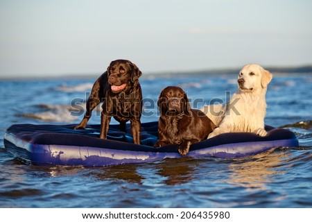 Three dogs on a mattress - stock photo