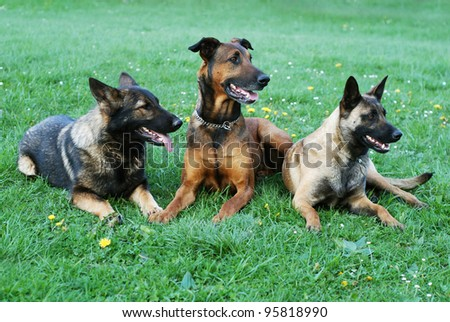 three dogs on a meadow
