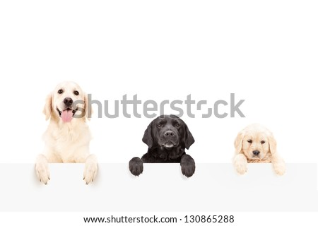 Three dogs posing behind a blank panel, isolated on white background - stock photo