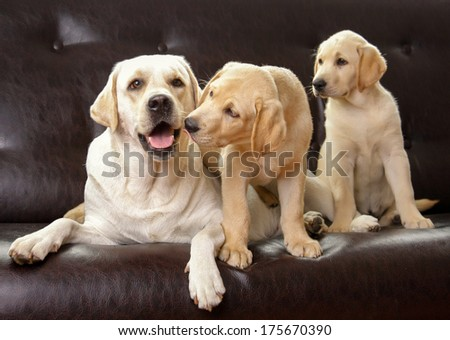 Three dogs sitting, isolated on black background