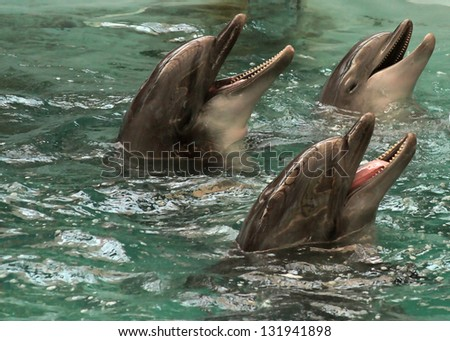 three dolphins in pool - stock photo