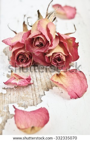 Three dried pink roses lying on shabby white painted wooden background. Shallow DOF. Filtered image. - stock photo