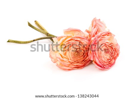 three dry roses isolated  on white - stock photo