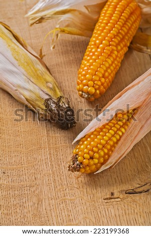 three ears of corn on wooden board very close up