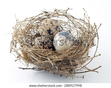 Three eggs in birds nest on white background