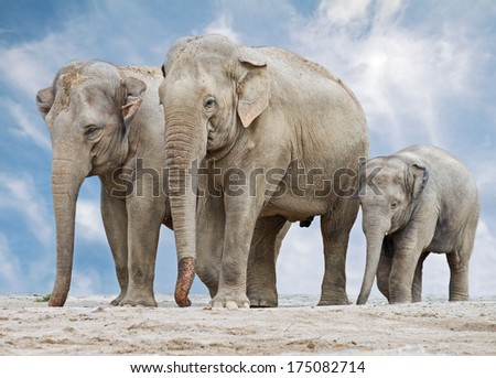 Three elephants on the backgrounds of blue sky.