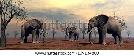 Three elephants standing between baobabs in the savannah by morning light - stock photo