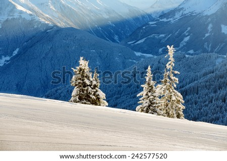 Three fir trees next to the ski slopes - stock photo