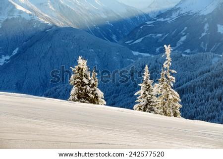Three fir trees next to the ski slopes - stock photo