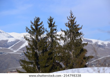 Three fir trees on mountains background - stock photo