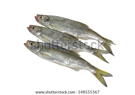 three fishes on white background
