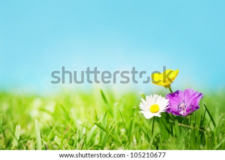 Three flowers on the grass in front of a blue sky