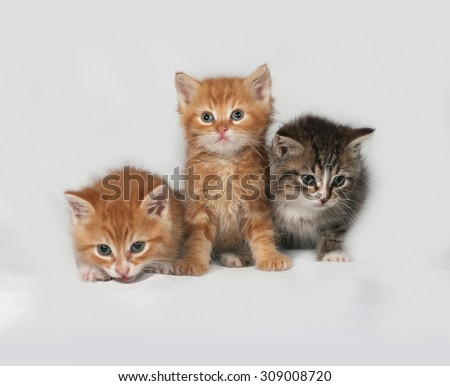 Three fluffy kitten sitting on gray background