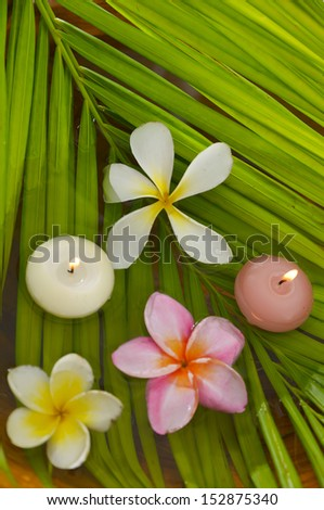 Three frangipani flowers and two candle with palm leaf - stock photo