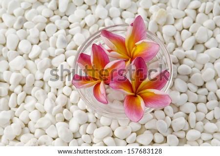 three frangipani in vase and white pebbles - stock photo