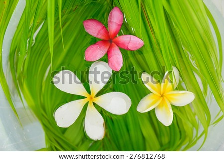 Three frangipani on wet palm leaf background - stock photo