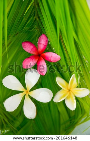 Three frangipani with palm leaf on wet - stock photo