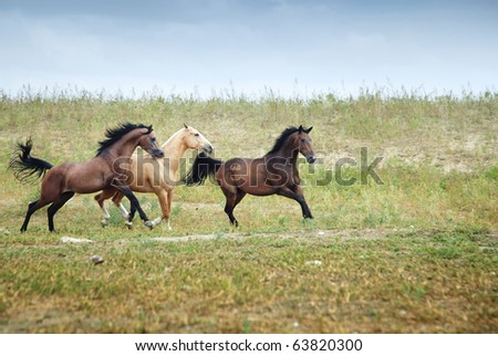 Three free horses running together in the steppe. Kazakhstan, Middle Asia. Natural light and colors