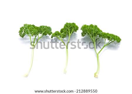three fresh herbs parsley isolated on white - stock photo