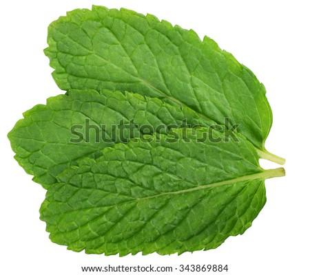 three fresh mint leaves isolated on white background - stock photo