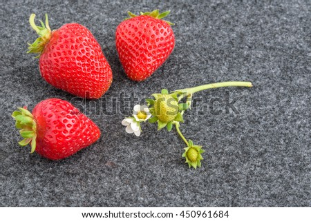 Three fresh picked strawberries and flowering piece of plant on a gray background  - stock photo