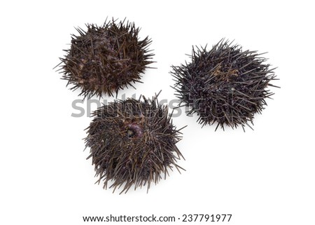 Three fresh raw sea urchins on white background