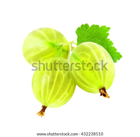 Three fresh ripe green gooseberry berries with leaves isolated on white background. Design element for product label, catalog print, web use. - stock photo