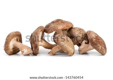 Three fresh shiitake mushrooms on white background - stock photo