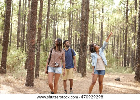 Three friends walking and pointing in a pine forest in the afternoon sunshine while wearing casual clothing